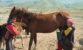 NEOBIČNA PIĆA Kumis – mliječno pivo dobiveno fermentacijom konjskog mlijeka