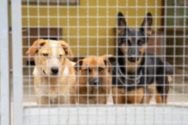 Udomljavanje pasa: upoznajte top pseće kandidate kojima je donirano 100 kg hrane